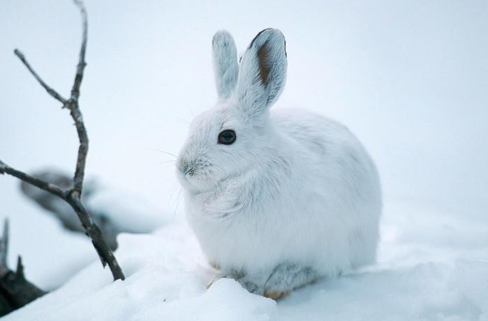 Фауна Арктики и Приполярья