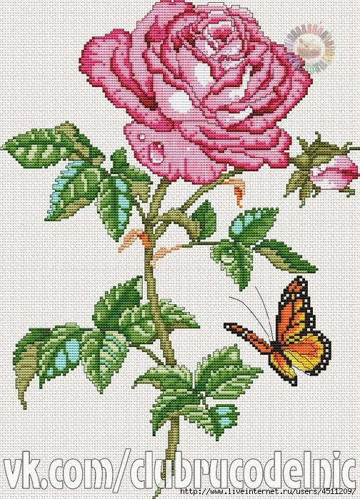 125803021_Rose_Beauty (504x699, 447Kb)
