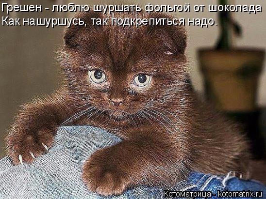 kotomatritsa_- (1) (548x411, 243Kb)