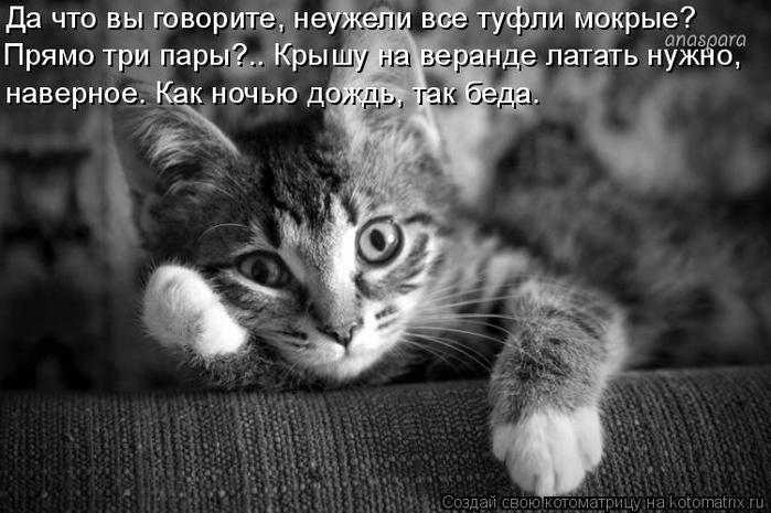 kotomatritsa_5 (700x465, 212Kb)