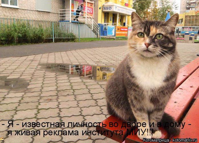 kotomatritsa_K (700x503, 463Kb)