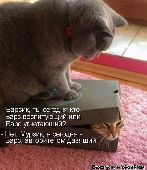 kotomatritsa_o (560x650, 252Kb)