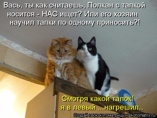 kotomatritsa_X (604x453, 228Kb)
