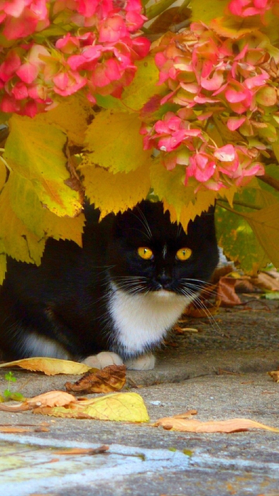 cat-kot-osen-listia-tsvetochki-autumn-flowers-leaves (393x700, 352Kb)
