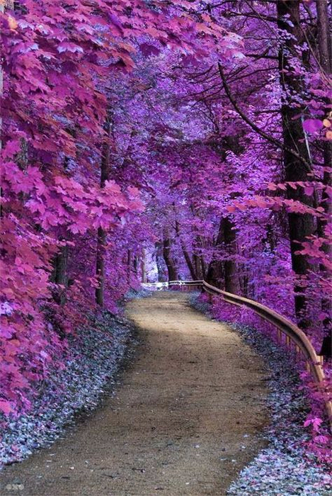 ac990538a7bedab8c081fc2c7a032326--beautiful-nature-photography-tree-tunnel (469x700, 465Kb)