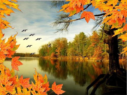 картинки птицы улетают осенью
