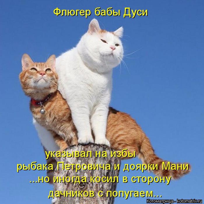 kotomatritsa__ (700x700, 396Kb)
