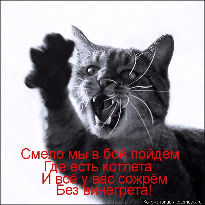kotomatritsa_7E (700x700, 290Kb)