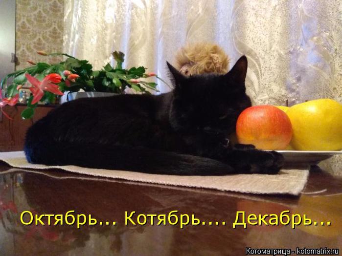 kotomatritsa_a (700x524, 356Kb)