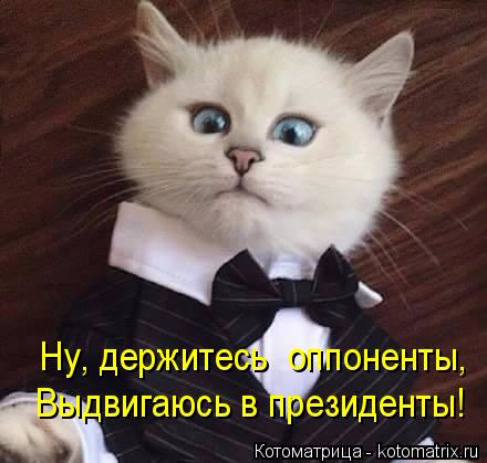 kotomatritsa_cx (440x419, 129Kb)