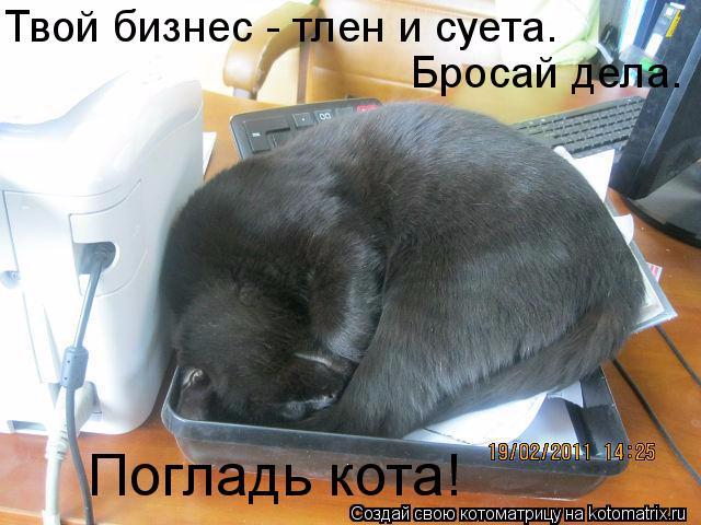 kotomatritsa_f (1) (640x480, 228Kb)