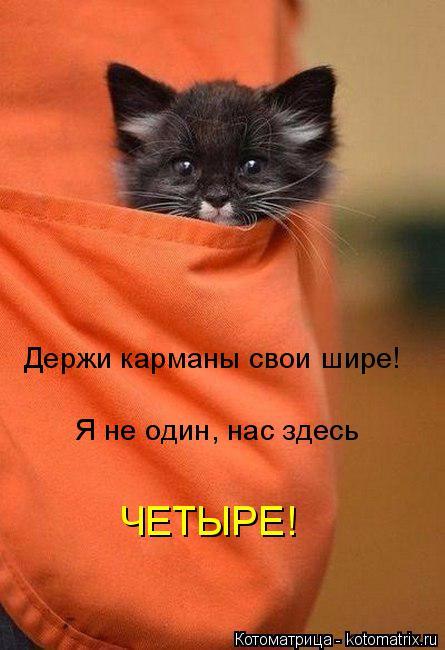 kotomatritsa_J (445x650, 213Kb)