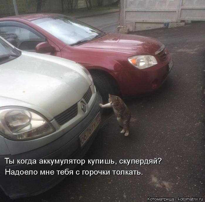 kotomatritsa_K (2) (700x687, 333Kb)