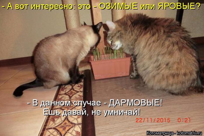 kotomatritsa_Sg (700x466, 343Kb)