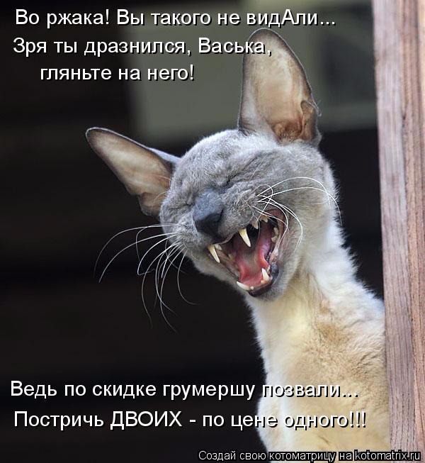 kotomatritsa_v (1) (600x653, 219Kb)