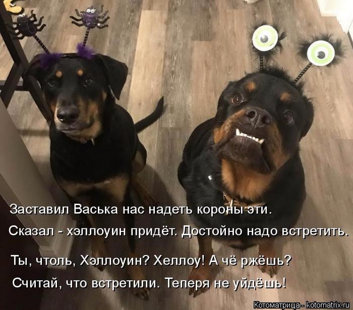 kotomatritsa_v (700x615, 384Kb)