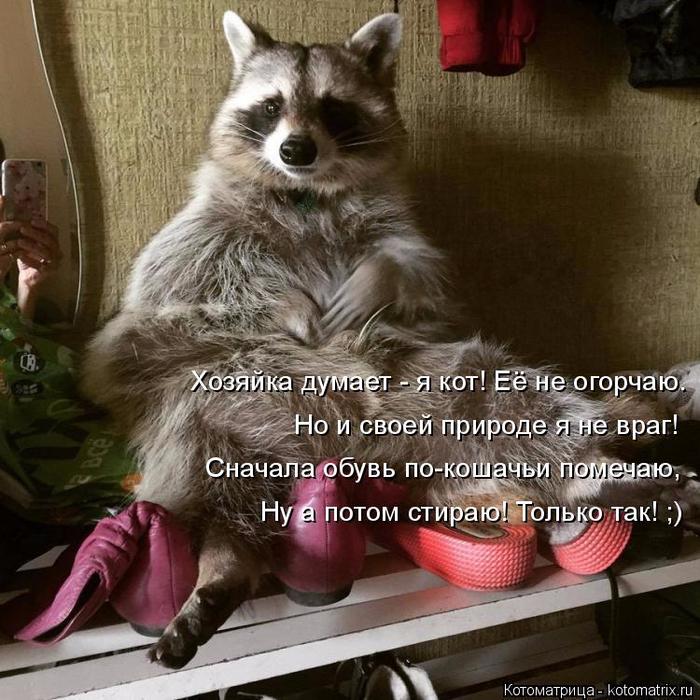 kotomatritsa_VQ (700x700, 478Kb)
