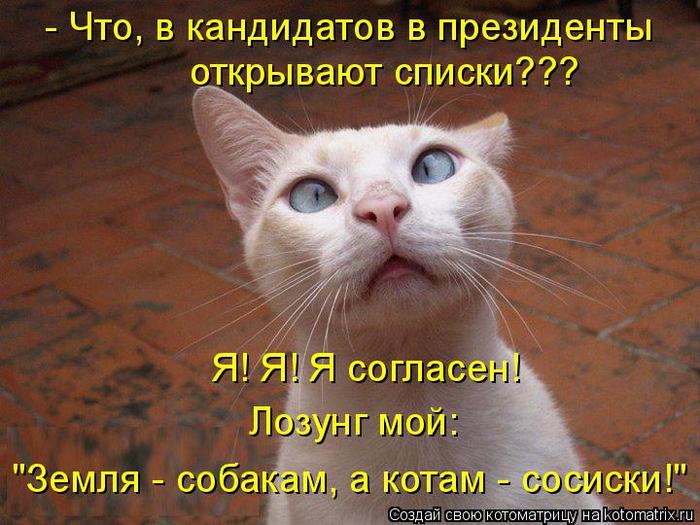 kotomatritsa_W (700x525, 458Kb)