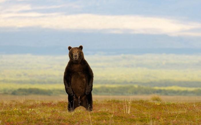Дикая природа России   фотограф натуралист Игорь Шпиленок