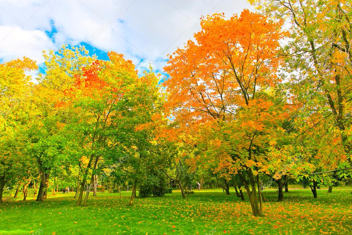 depositphotos_7291768-stock-photo-beautiful-autumnal-forest (700x466, 616Kb)
