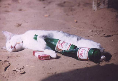 барсик пьян (400x274, 22Kb)