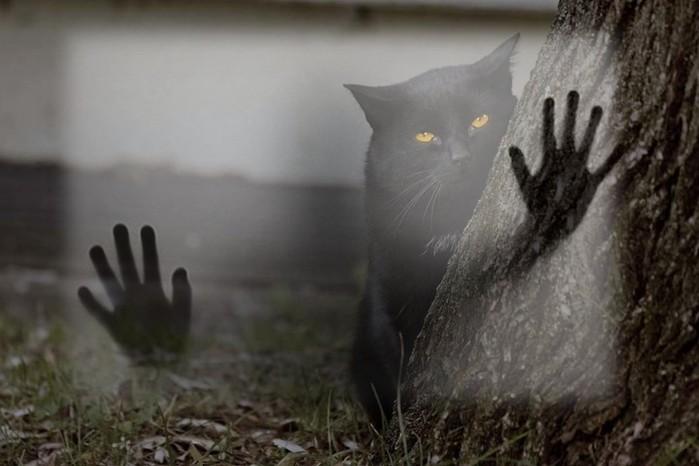 Могут ли кошки видеть призраков? Реальное видео