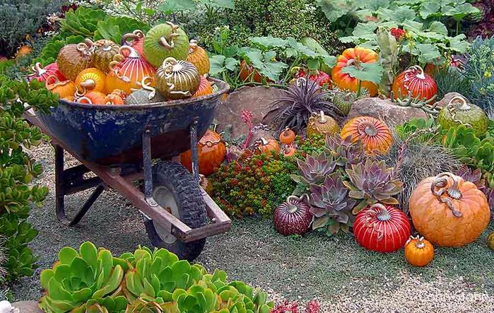 pumpkin-garden-3 (700x443, 503Kb)