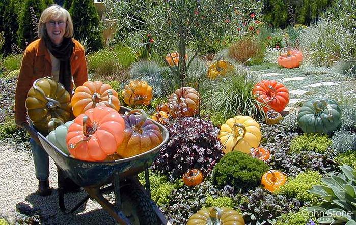 molly-stone-pumpkin-garden (700x443, 508Kb)
