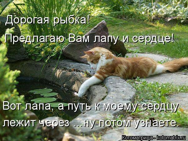 kotomatritsa_g (600x450, 425Kb)