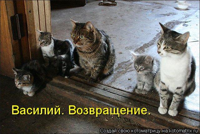 kotomatritsa_HP (640x430, 376Kb)