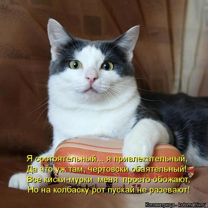 kotomatritsa_k (700x700, 483Kb)