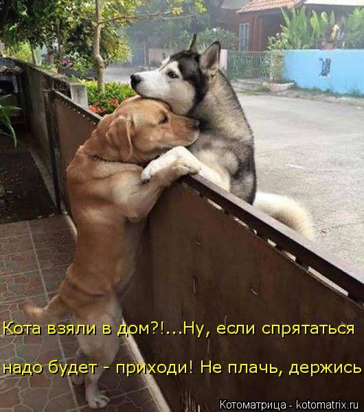 kotomatritsa_pT (530x600, 362Kb)