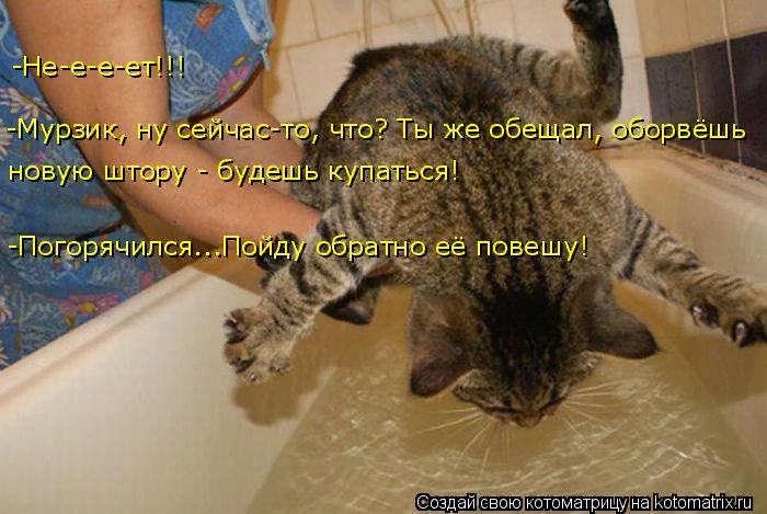 kotomatritsa_-y (700x469, 395Kb)