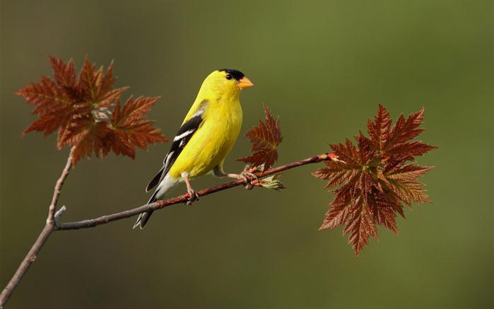 bird-1 (700x437, 284Kb)