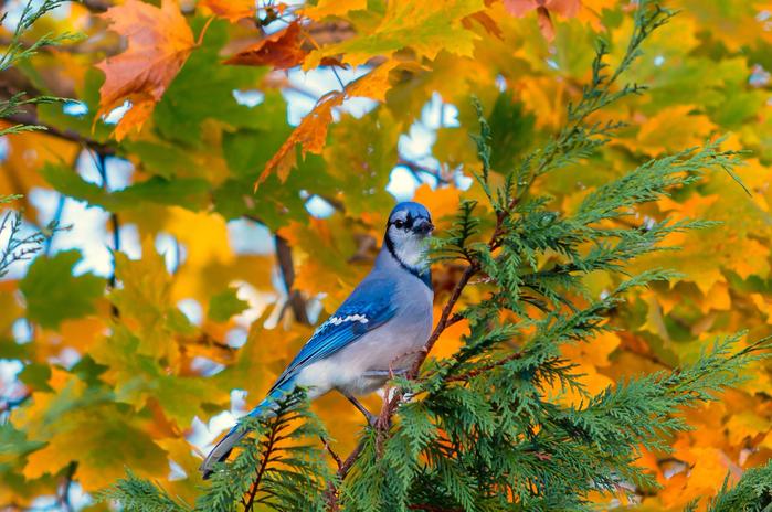 ptica-derevo-vetka-listya-osen (700x464, 509Kb)