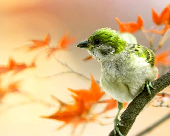 ptica-klyuv-vetka-listya-osen (700x560, 330Kb)