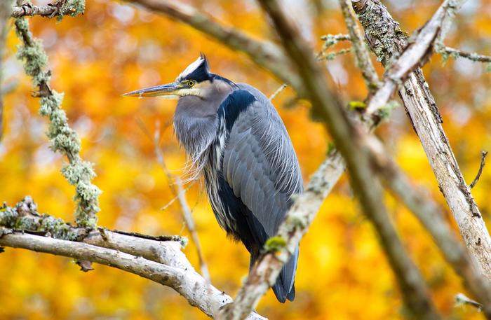 ptica-klyuv-vetki-osen (700x457, 451Kb)