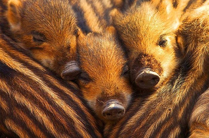 Умилительные фото детенышей животных