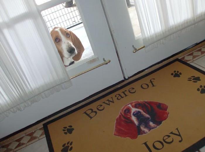 Осторожно, злые собаки! Но их почему-то хочется немедленно погладить