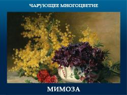 5107871_MIMOZA (250x188, 85Kb)