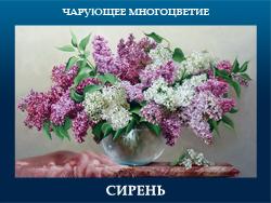 5107871_SIREN (250x188, 88Kb)