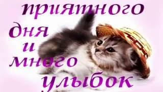 Улыбок от котенка! (320x180, 13Kb)
