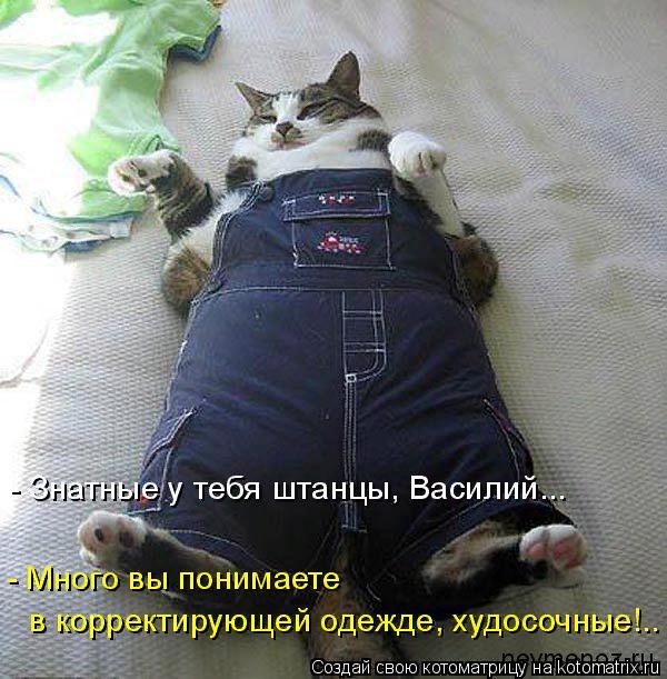 kotomatritsa_4G (600x611, 435Kb)
