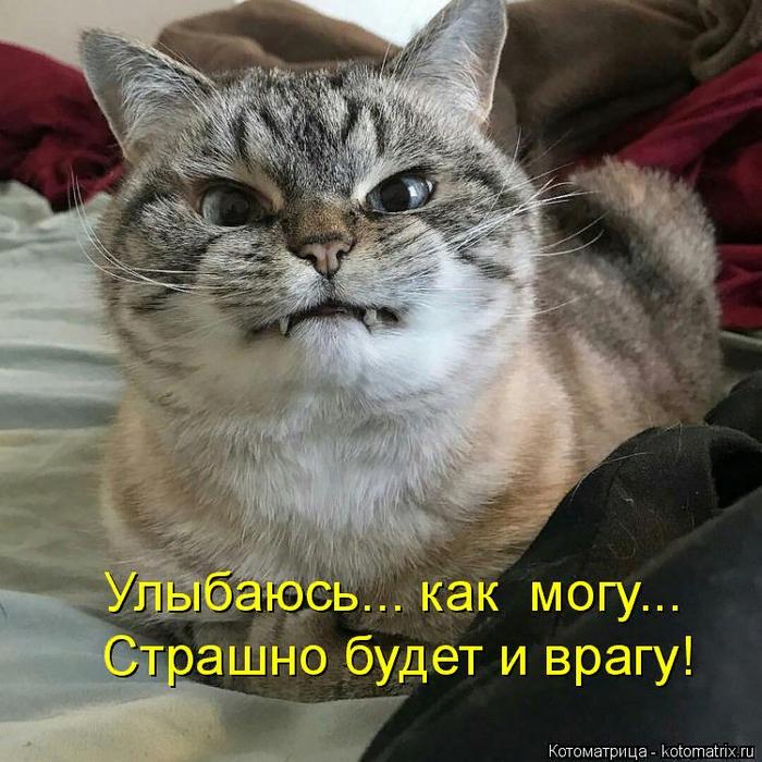 kotomatritsa_M (700x700, 600Kb)