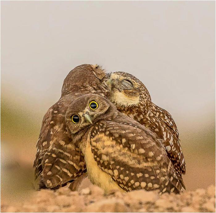 Необычный конкурс Comedy Wildlife Photography Awards 2017