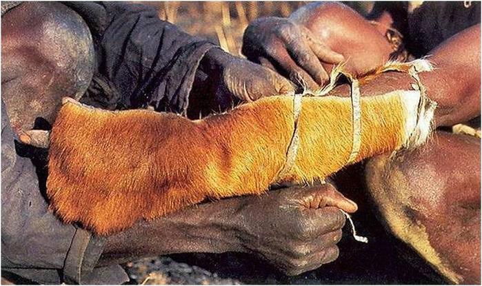 138345545 111617 0833 3 Как ловят питонов? Фотографии охоты на змей в Африке