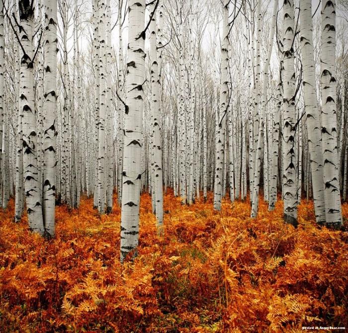 Forest_Landscapes_by_Lars_van_de_Goor_23 (700x670, 673Kb)