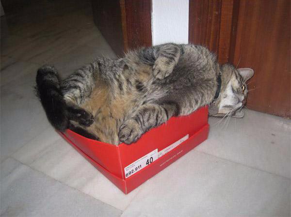 cats-in-box-13 (600x448, 131Kb)