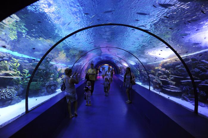 аквариум в анталии 4 (700x465, 472Kb)