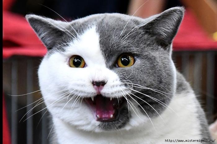 Шоу супер-кошек